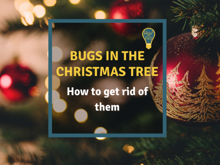 Christmas tree how to get rid of bugs