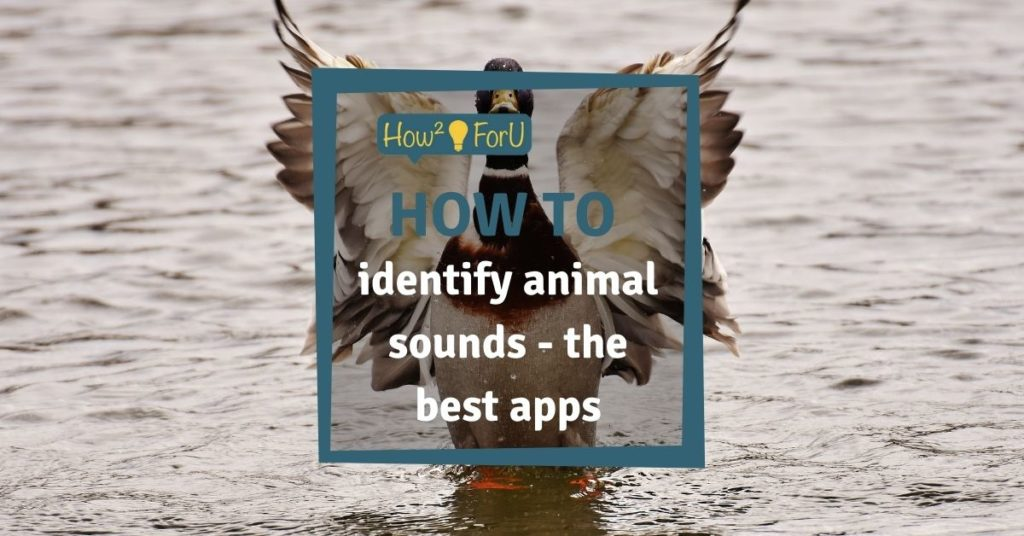 Identify animals by their sounds with these iPhone apps