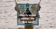 How to identify animal sounds - the best apps for iPhone