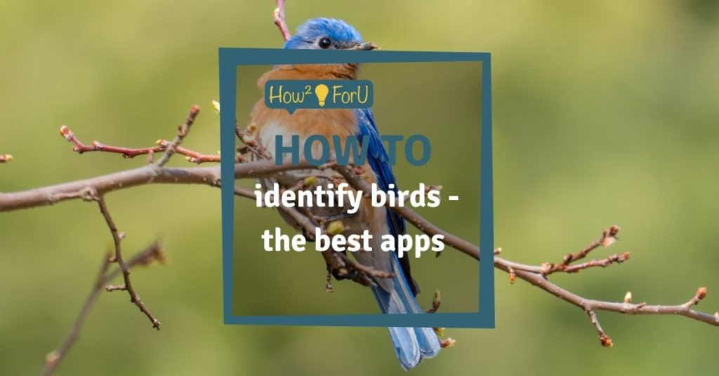 The best apps to identify birds