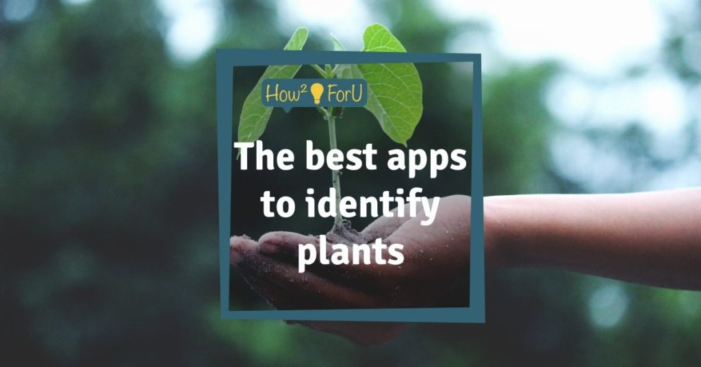 The best apps to identify plants