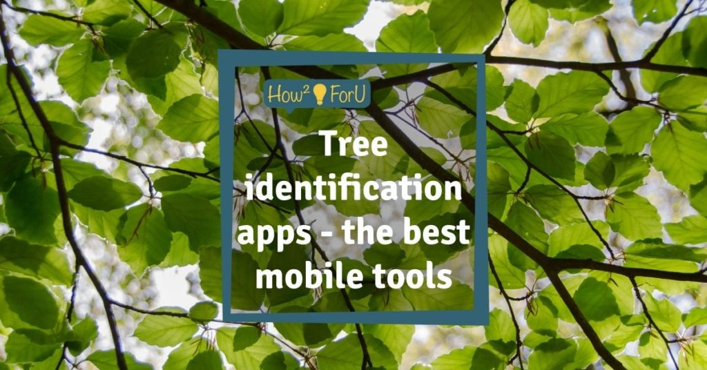 Tree identification apps