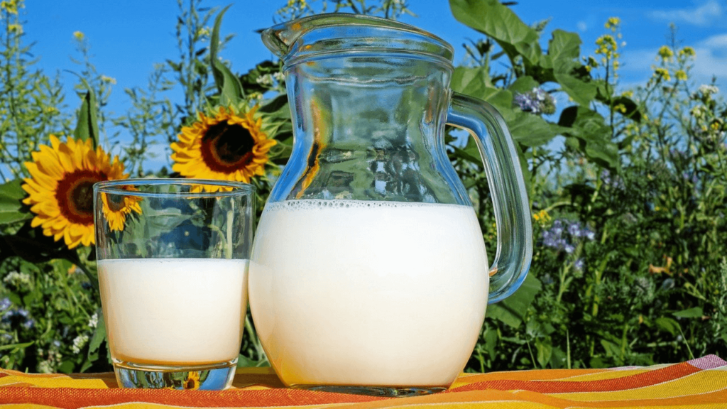 A jug and a glass of milk standing in front of a field of sunflowers