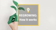 Regrowing: How it works